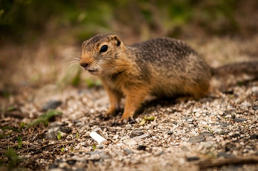 Animal, Squirrel, Nagertier, Nature, Rodent, Garden