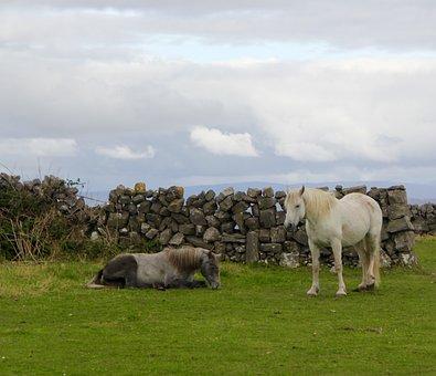 Ireland, Horses, Irish, Pasture, Countryside