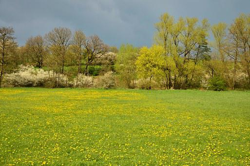 Spring Meadow, Meadow, April, Spring, Landscape, Trees