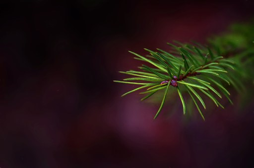 Painting, Image, Needles, Green, Spruce