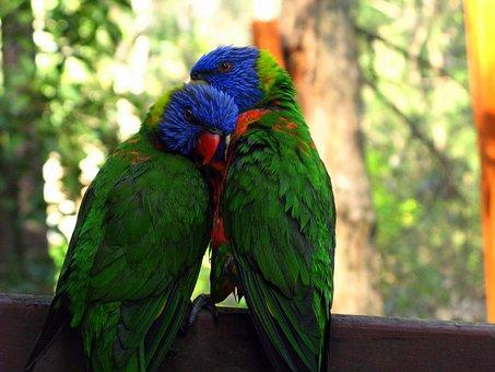 Rainbow Lorikeet, Zoo, Love, Couple, Parrot