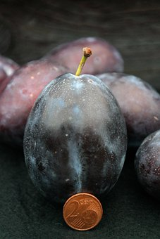 Real Plum, Plum, Size Comparison, Huge, Large, Fruit