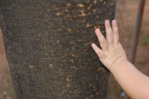 Elephant, Baby, Toddler, Texture, Skin, Smooth, Sweet