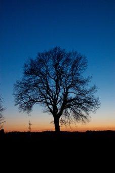 Tree, Sun, Sunset, Sunrise, Dawn, Afterglow, Red, Light