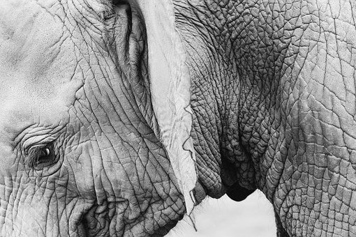 Elephant, Animal, Wildlife, Skin, Wrinkles, Thick