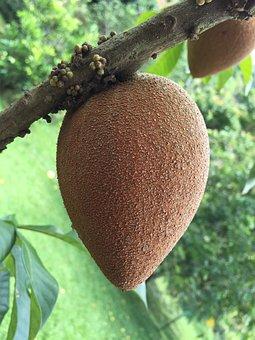Tropical Apple, Sapote Fruit, Marmalade Plums, Fruit
