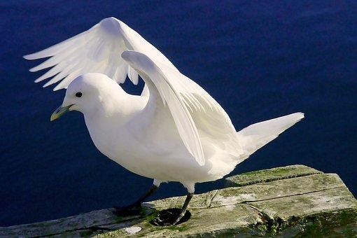 Seagull, Bird, Perched, Gull, Seabird, Animal, Feathers