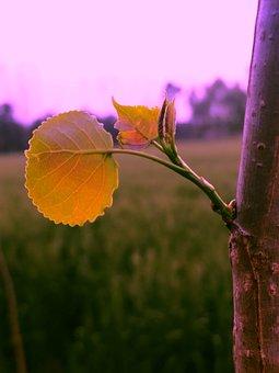 Leaves, Foliage, Nature, Macro, Macro Photography