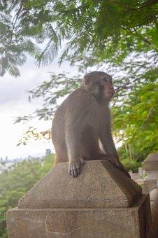 Monkey, Primate, Park, Animal, Wildlife, Nature