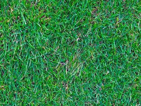Rush, Grass, Green, Artificial Turf, Graze, Grass Court