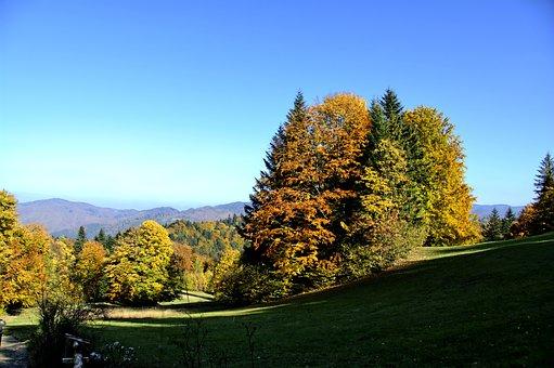 Mountains, Pieniny, Landscape, Poland, Tree, Top