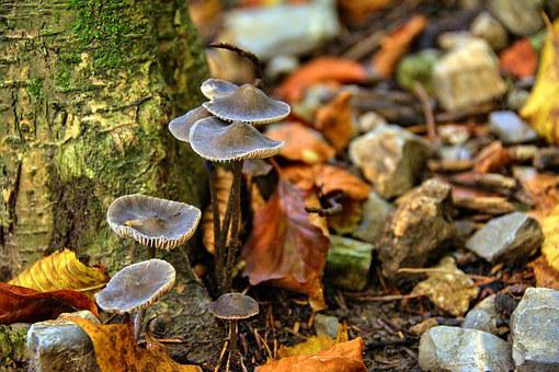 Mushrooms, Mountains, Pieniny, Landscape, Poland, Tree