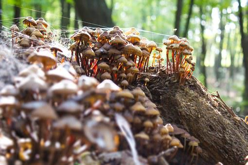 Mushroom, Mushrooms, Forest, Autumn, Poisoning, Wild