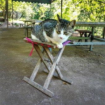 Cat, Meow, Qingdao, Pets, Chait, Outdoor