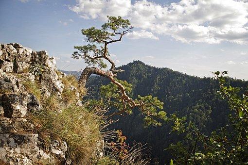 Malopolska, Pieniny, Sokolica, Dunajec, Tops, Mountains