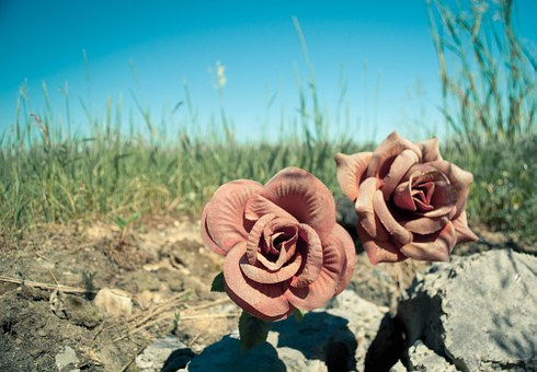 Flowers, Road, Sky, Dirt, Grass, Dust, Sun, Roses