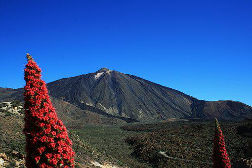 Teide National Park, Tajinaste Rojo, Red Flowers