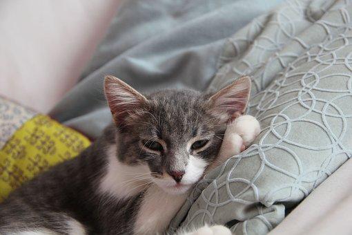 Cat, Gatta, Miao, Cat Nose, Portrait Of Cat, Feline