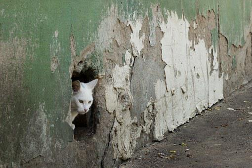 Cat, Wall, Hole, Surprise, Old, Ruin