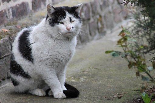 Cat, Tomcat, Cat's Eyes, Kitten, Pet, Look, Animal, Fur