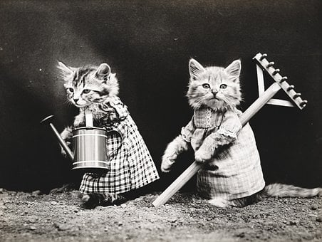 Cat, Cats, Kitten, Kittens, Dressed, Clothed, Cute