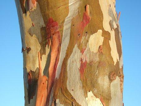 Tree Bark, Australia, Eucalypt, Colorful
