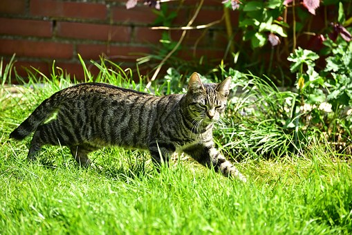 Cat, Getiegert, Sneak, Grass, Small, Cute
