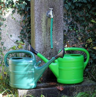 Watering Cans, Watering Hole, Water, Garden, Irrigation