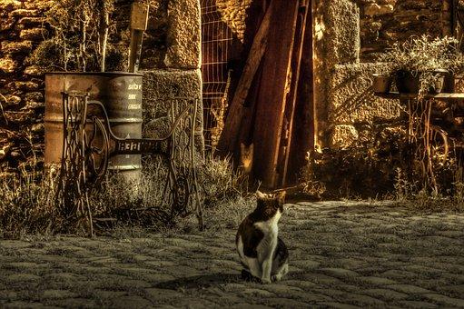 Cat, Night, Lane, Light, Pavers, Old