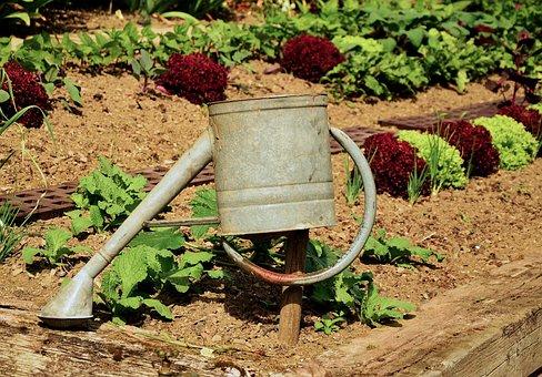 Garden, Gardening, Plant, Casting, Salad, Watering Can