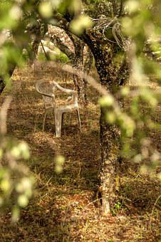 Chair, Garden, Nature, Single, Among Trees, Resting