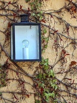 Lamp, Light, Wall, Lighting, Lantern, Climber Plant