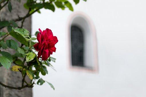 Rose, Window, Church, Church Window, Arch, Round Arch