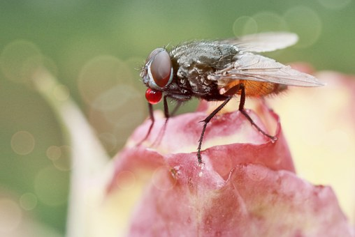Fly, Insect, Close, Animals, Nature, Compound Eyes