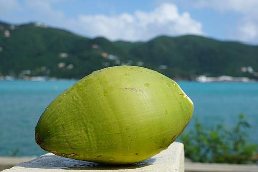 Coconut, Caribbean, British Virgin Island, Sea, Island