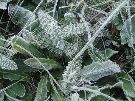 Frost, Winter, Grass, Frozen, Nature, Cold, Frosty