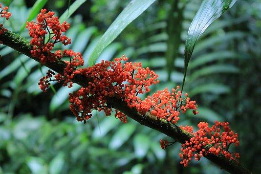Jungle, Costa Rica, Plant, Central America, Exotic
