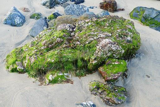 Beach, Rock, Stone, Moss, Seaweed, Nature, Sea, Water