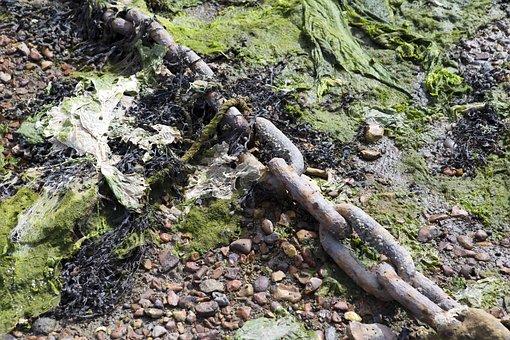 Low Tide, Mooring Chain, Algae, Seaweed