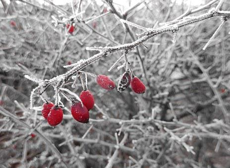 Hoarfrost, Winter Magic, Cold, Wintry, Nature