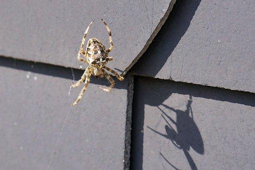 Spider, Insect, Web, Nature, Arachne, Animal, Cobweb
