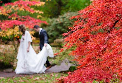 Wedding, Maple, Japan, Autumn, Dress, Suit, Man, Woman