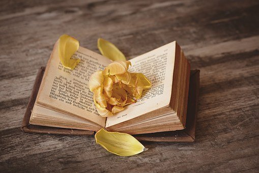 Book, Open, Pitched, Book Pages, Pages, Font, Flower