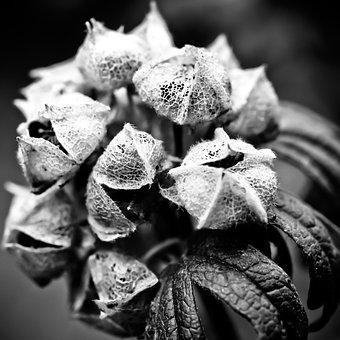 Hydrangea, Flower, Garden, Nature, Close, Plant, Macro