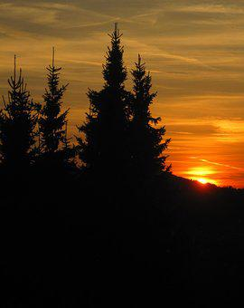 Sun Goes Down, Firs, Edge Of The Woods, Atmospheric