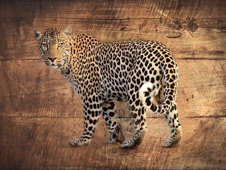 Leopard, Wood, Africa, Gimp