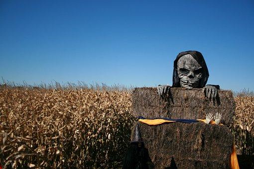 Skeleton, Halloween, Spooky, Skull, Horror, Death