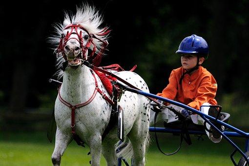 Horse, Horse Racing, Reiter, Helm, Equestrian