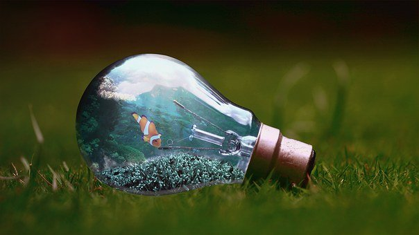 Light Bulb, Fish, Nature, Water, Aquarium, Coral