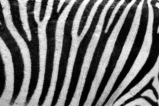 Abstract, Africa, Animal, Background, Black, Camouflage